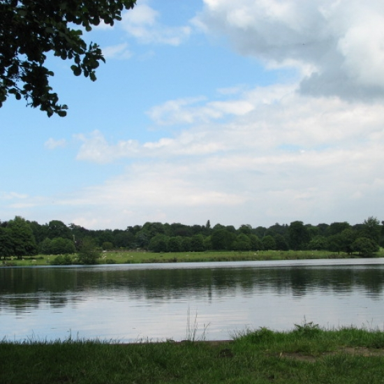 Lake at Gunton Park